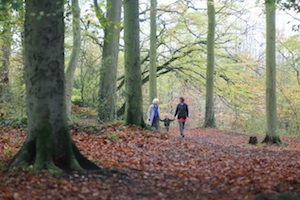 Walking through beech woods